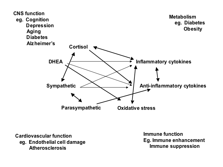 Non linear network of mediators in the stress response